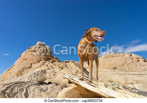 dog standing in desert - csp36933734
