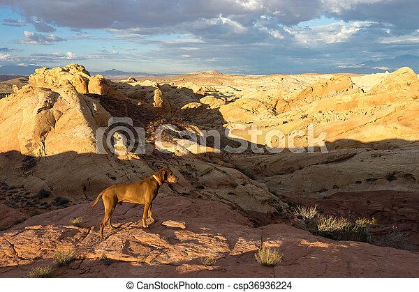 dog standing in he desert - csp36936224