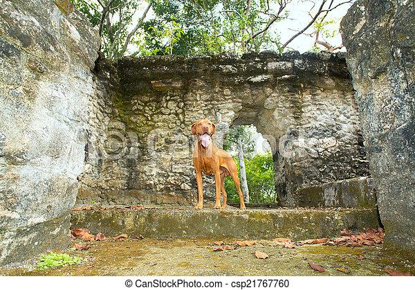 dog standing in ruins - csp21767760