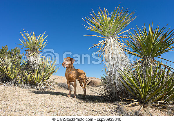 dog standing in the desert - csp36933840
