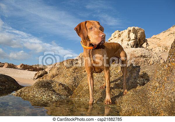 dog standing on seaside cliff - csp21882785