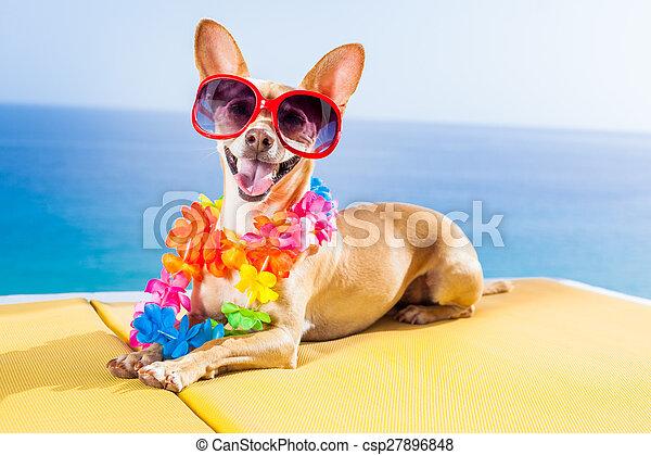 dog summer beach - csp27896848