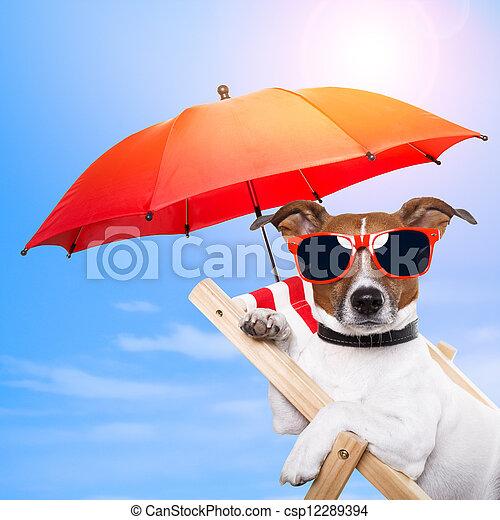 dog sunbathing on a deck chair - csp12289394