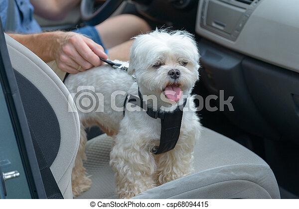 Dog traveling in a car - csp68094415