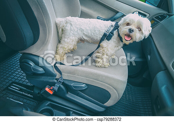 Dog traveling in a car - csp79288372