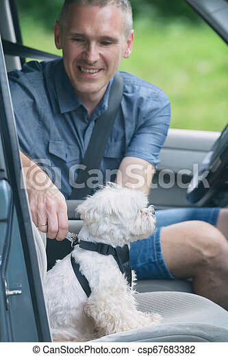 Dog traveling in a car - csp67683382