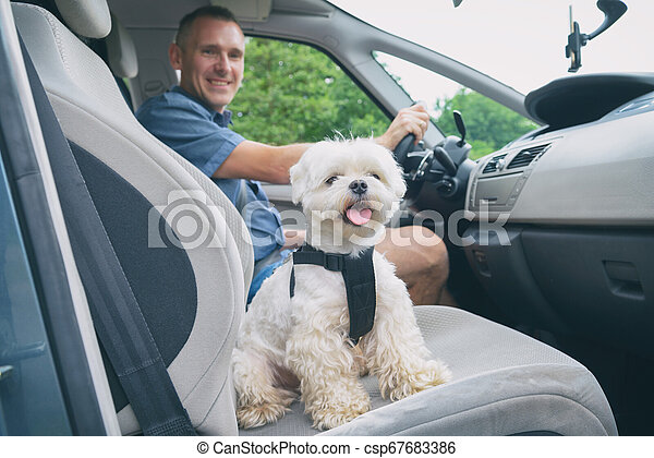 Dog traveling in a car - csp67683386