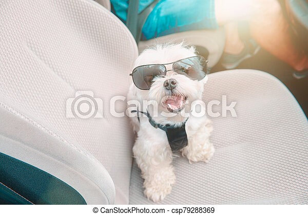 Dog traveling in a car - csp79288369