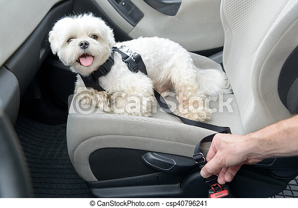 Dog traveling in a car - csp40796241