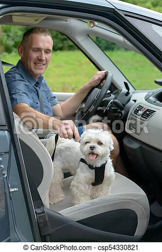 Dog traveling in a car - csp54330821