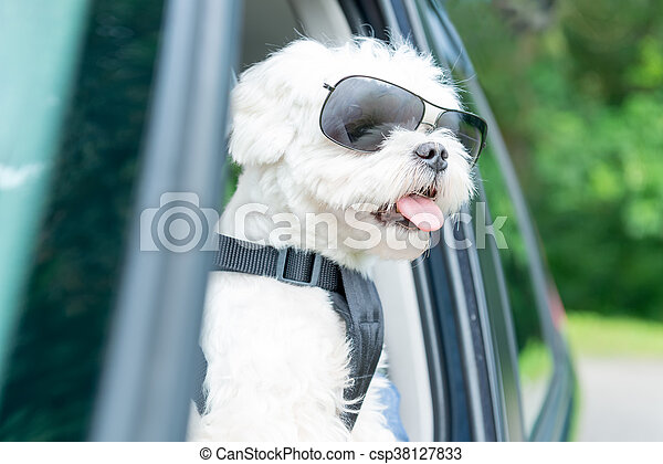 Dog traveling in a car - csp38127833