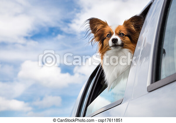 Dog traveling in the car - csp17611851