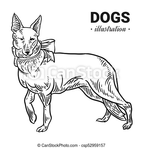 Dog vector hand drawn illustration, drawing, engraving, ink, line art, vector. - csp52959157