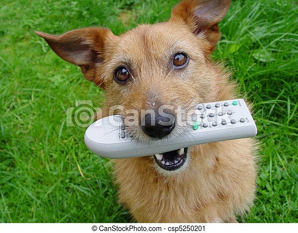dog, ver - csp5250201