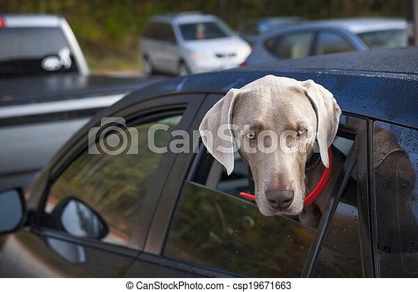 Dog waiting in car - csp19671663
