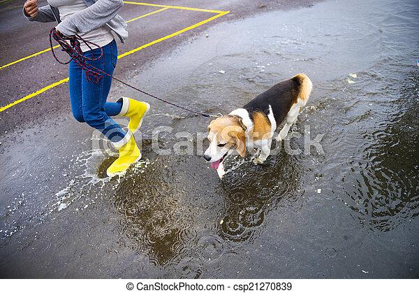 Dog walk in rain - csp21270839