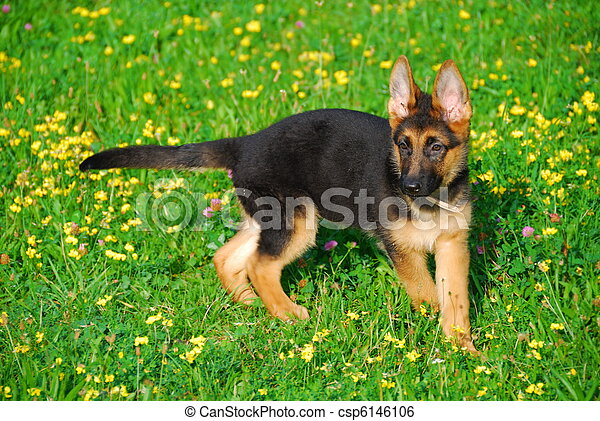 Dog wandering in the meadow - csp6146106