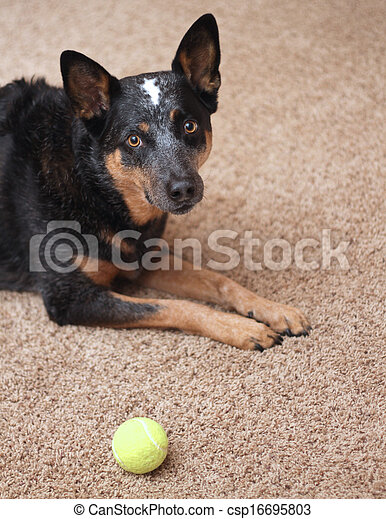 Dog wants to play - csp16695803