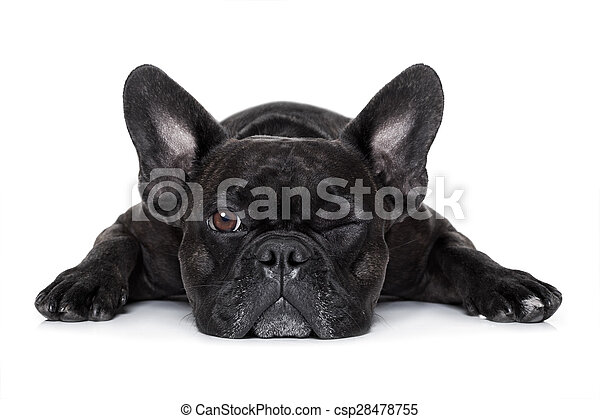 dog watching at you - csp28478755