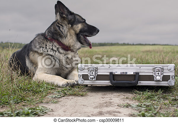 Dog Watching Briefcase - csp30009811