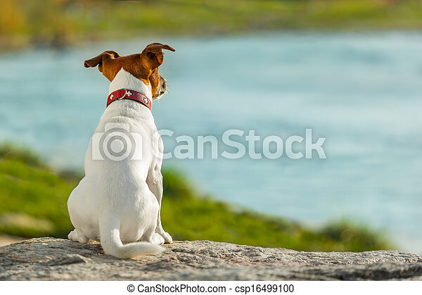 dog watching  - csp16499100
