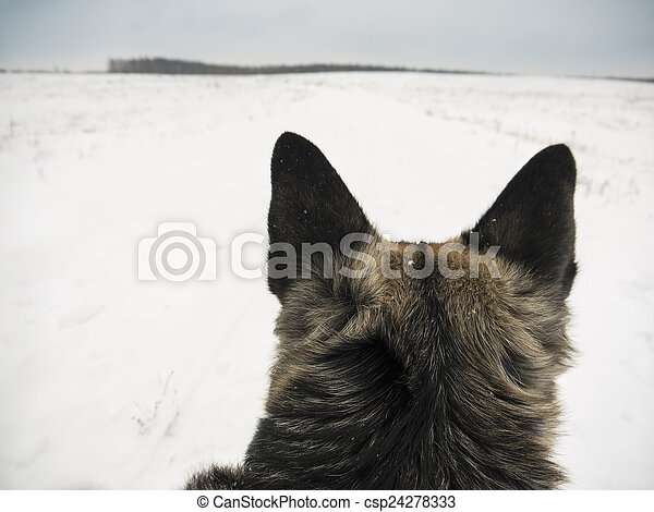 Dog Watching - csp24278333