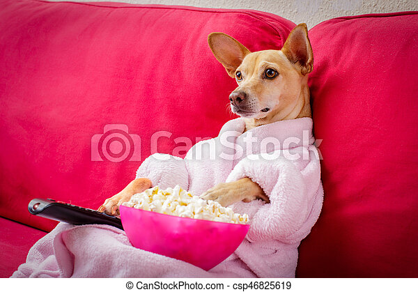 dog watching tv on the couch - csp46825619