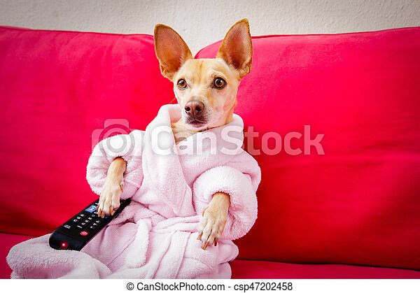dog watching tv on the couch - csp47202458