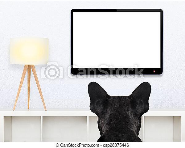 dog watching tv - csp28375446