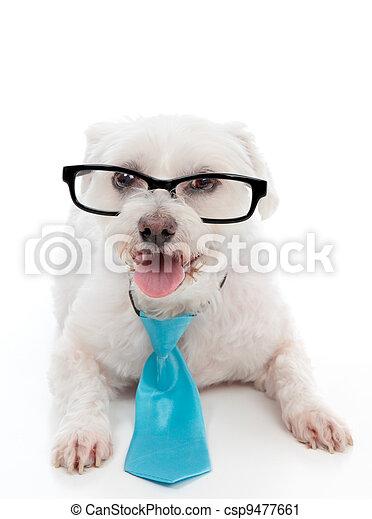 Dog wearing eye glasses - csp9477661