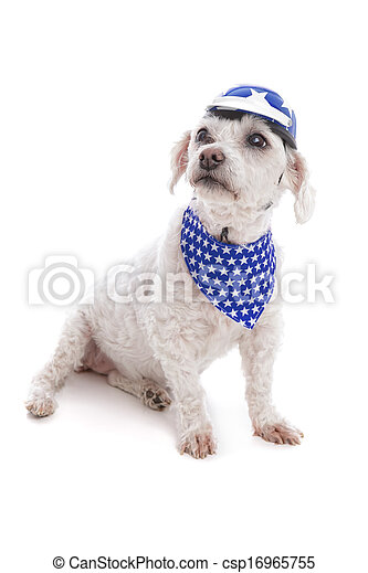 Dog wearing helmet and bandanna - csp16965755