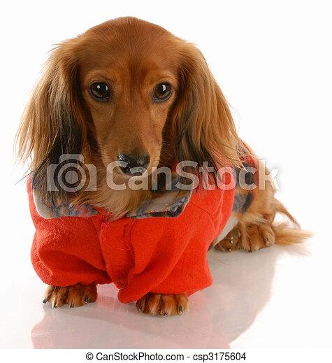 Big Dog Wearing Sweater Dog wearing red...