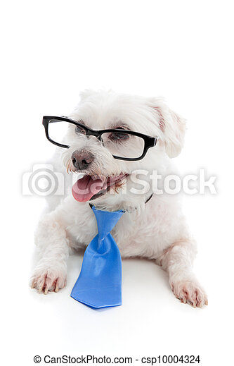 Dog wearing spectacles glasses - csp10004324