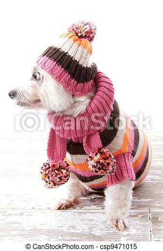 Dog wearing winter sweater beanie scarf - csp9471015