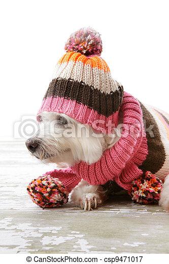 Dog wearing winter woollen clothing - csp9471017