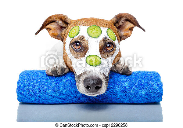 dog with a beauty mask - csp12290258