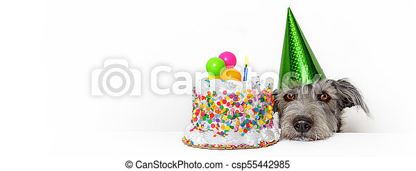 Marvelous Dog With Birthday Cake Web Banner Cute Dog With Party Hat And Personalised Birthday Cards Paralily Jamesorg