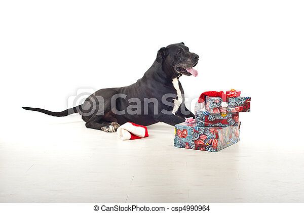 Dog with Christmas gifts - csp4990964