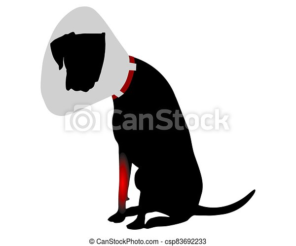 Dog with elizabethan collar and pain in the foreleg - csp83692233