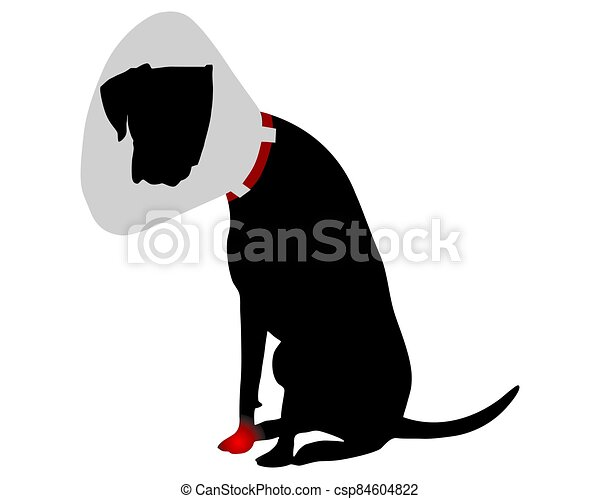 Dog with elizabethan collar and pain in the paw - csp84604822