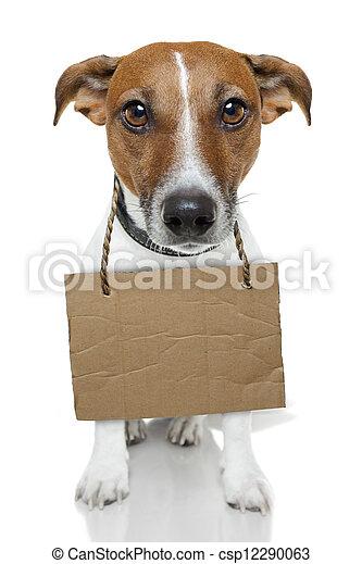 Dog with empty cardboard - csp12290063