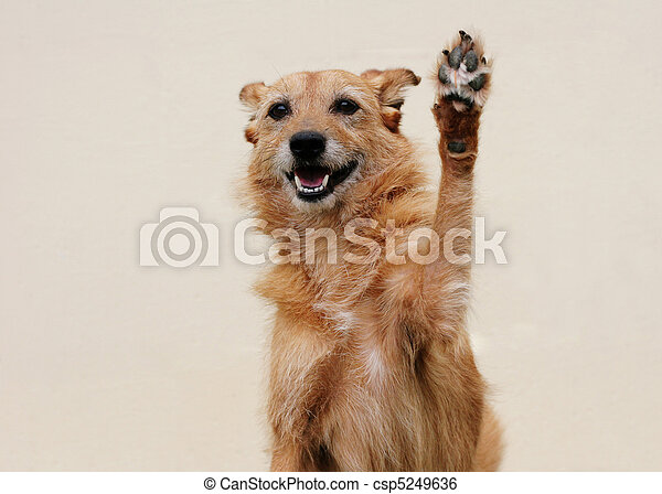 Dog with her paw raised high - csp5249636