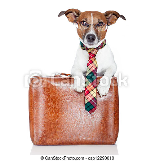dog with leather bag - csp12290010