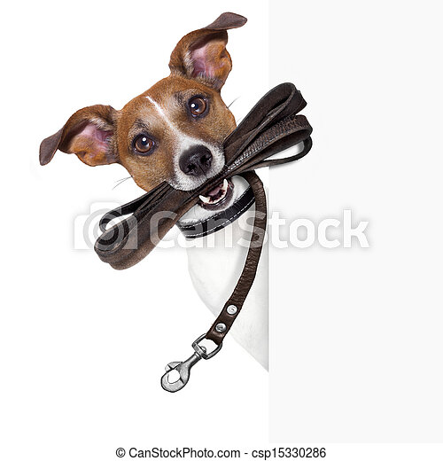 dog with leather leash - csp15330286