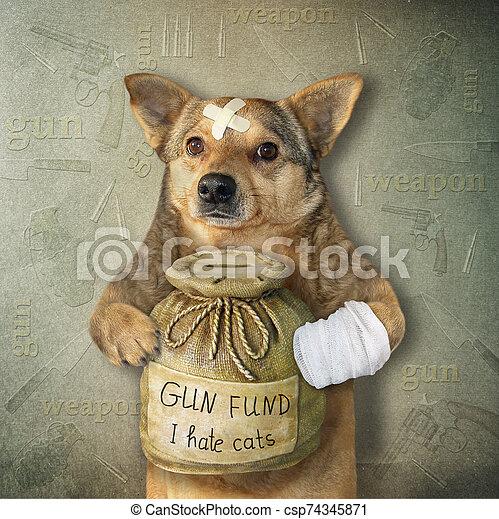 Dog with money box for gun fund 2 - csp74345871