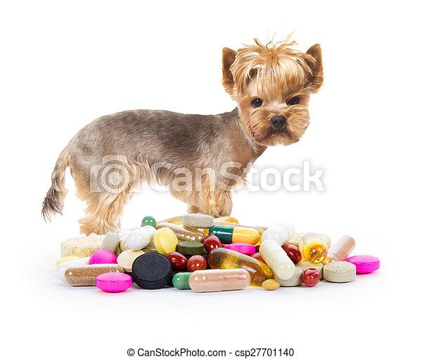 Dog with pills - csp27701140
