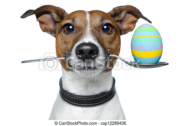 dog with spoon and easter egg - csp12289436