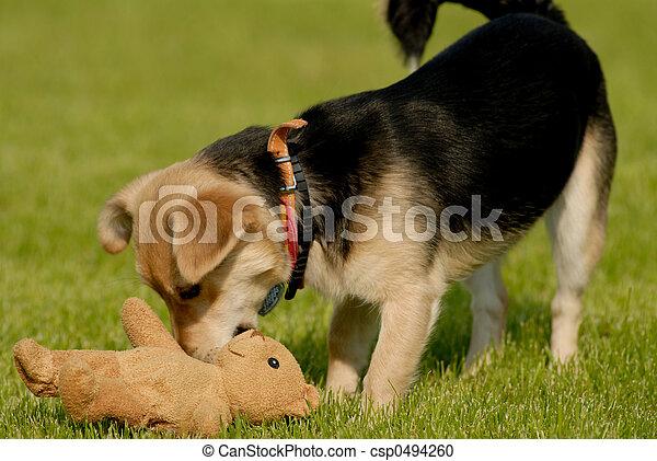 Dog with teddy bear - csp0494260