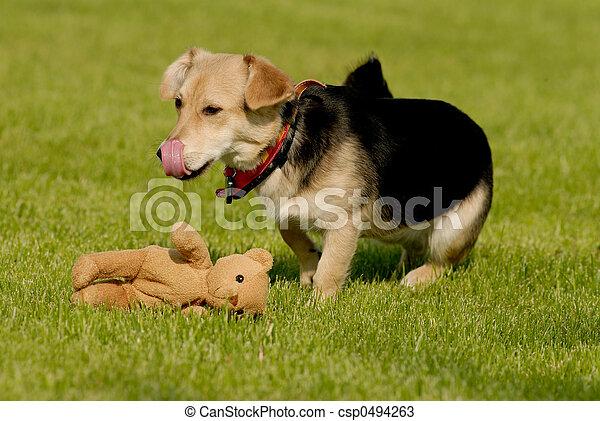 Dog with teddy bear - csp0494263