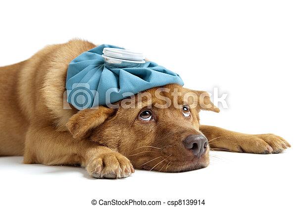 dog, ziek - csp8139914